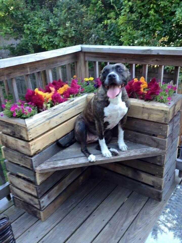 rustic pallet corner planter bench