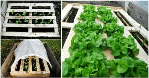 DIY Pallet Vegetable Garden